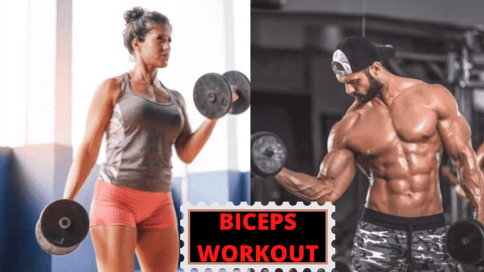 Average Biceps Size for both male and female