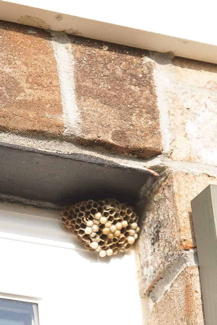 how to get rid of wasps nest
