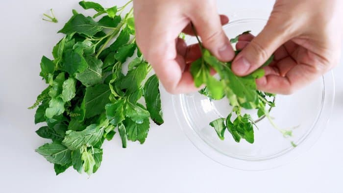 Holy Basil being plucked from stems for Thai Basil Chicken