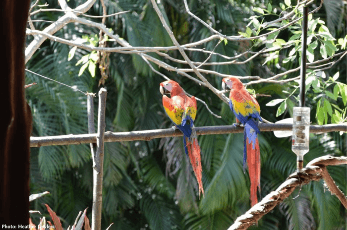 Costa rica has lots of colorful birds
