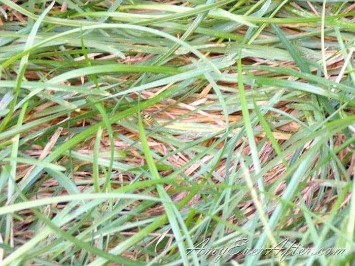 Kodak PIXPRO AZ401 Review - grass and bee, close up