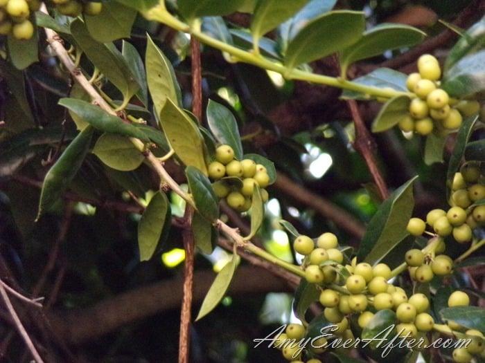 Kodak PIXPRO AZ401 Review - grape vine, full zoom