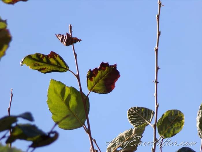 Kodak PIXPRO AZ401 Review - leaves and sky, full zoom