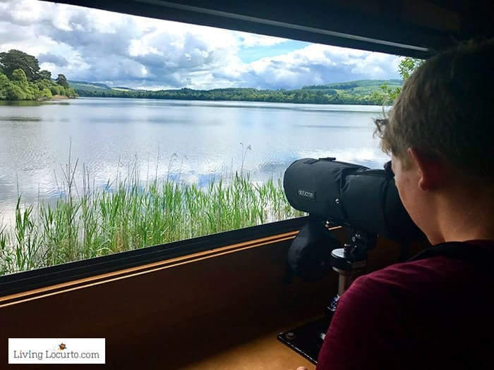 Bird watching at Loch of the Lowes Visitor Centre. 5 Best Outdoor Scotland Family Vacation Ideas! Amazing nature trips in Scotland for families. Kid friendly Scottish highlands vacation ideas and travel tips.