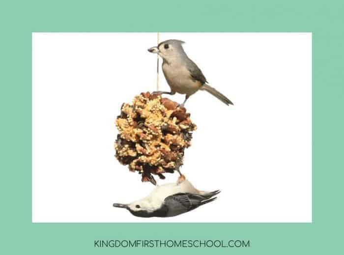 7 super fun and easy Thanksgiving Crafts for Kids - Pinecone bird feeder