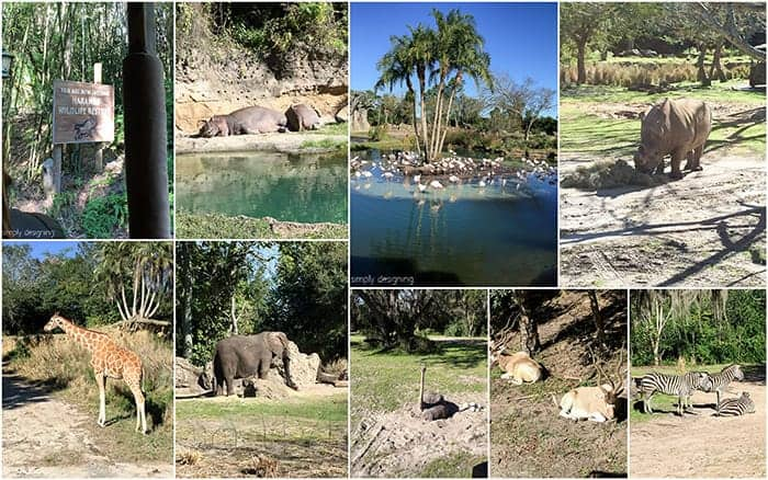 Collage of Safari Animals seen on Animal Kingdom Kilimanjaro Safari