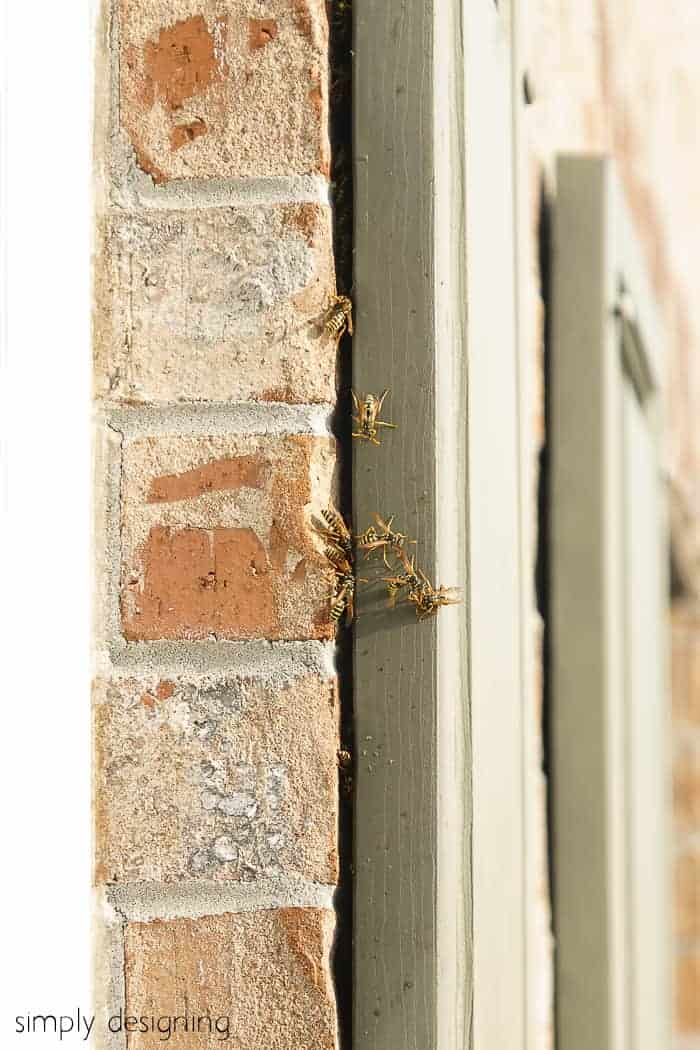 wasps crawling under shutters - wasp nest how to remove