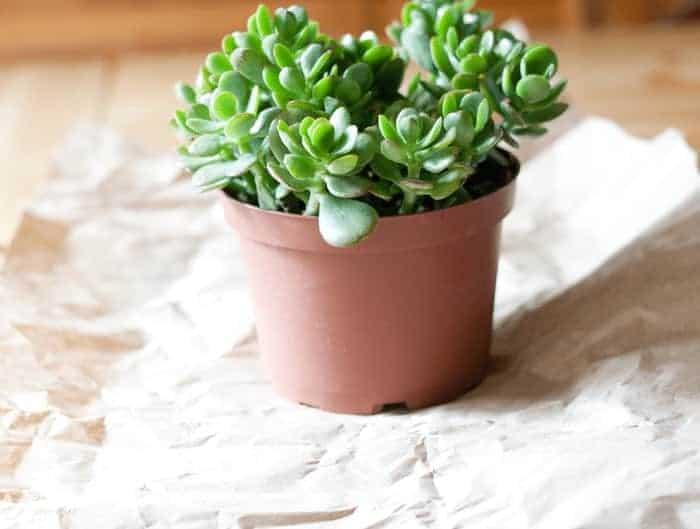 Plant Wrap4