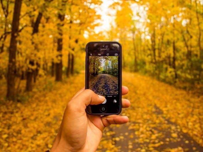 mobile phone on safari