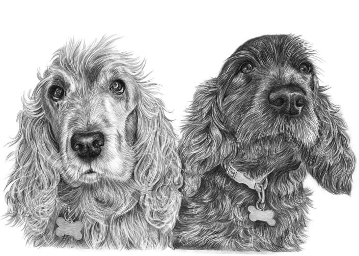 Pencil Drawing of Cocker Spaniel Dogs