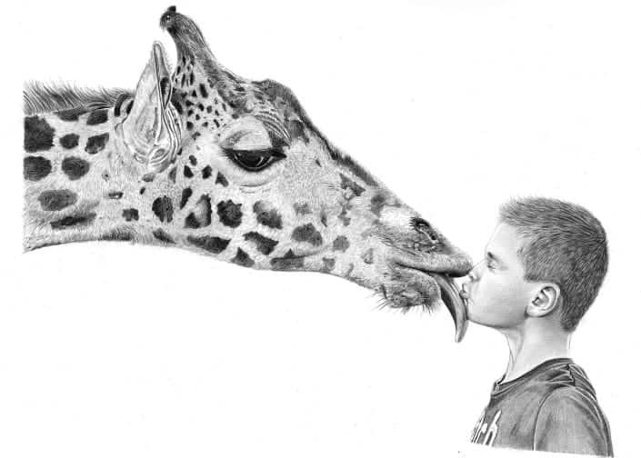 Pencil Drawing of Giraffe Licking Boy's Face