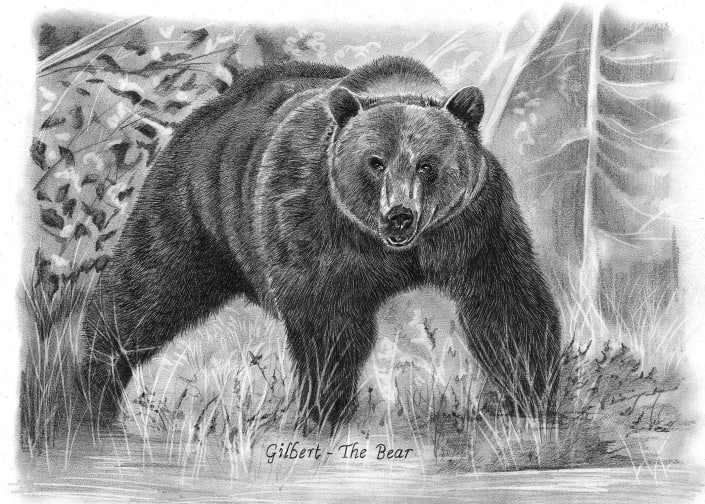Pencil Drawing of Grizzly Bear