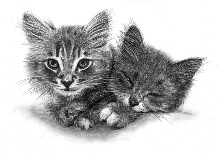 Pencil Drawing of Kittens