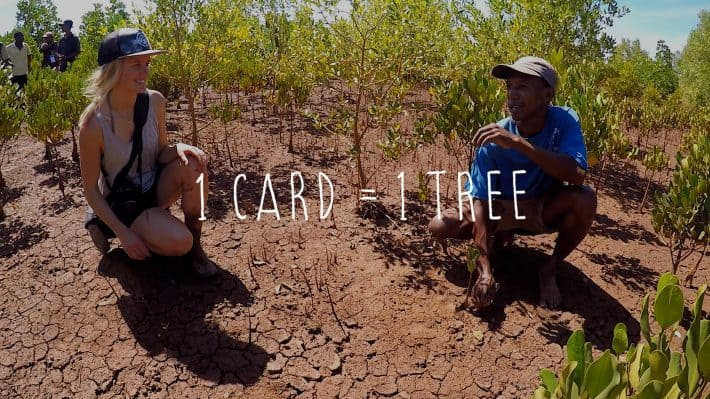 Little Difference: Reforestation in Africa