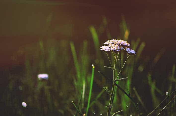 Growth Mindset Flowers