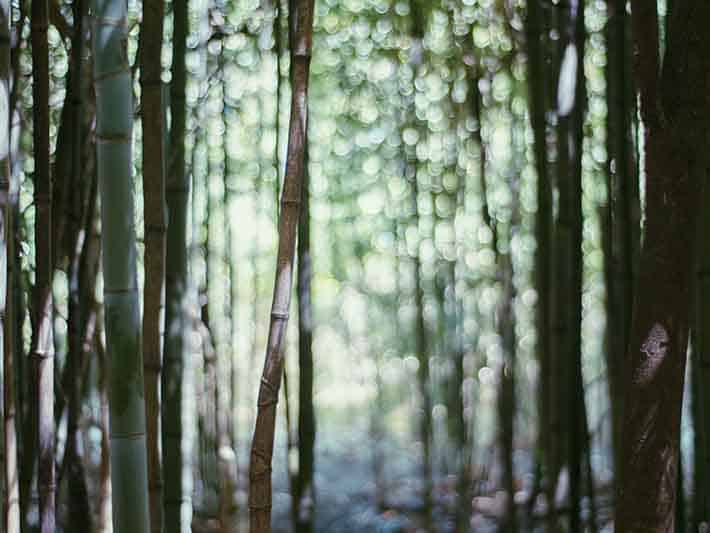 Bamboo the good and the bad