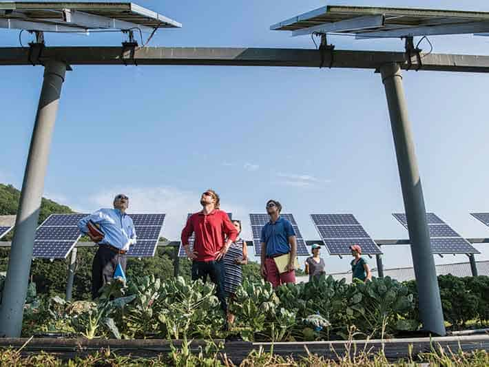 Solar panels combined with agriculture