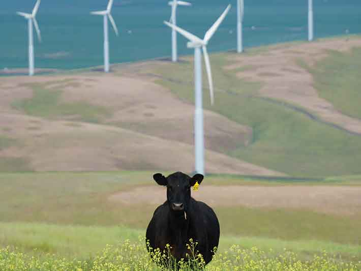 Wind energy turbines with cow