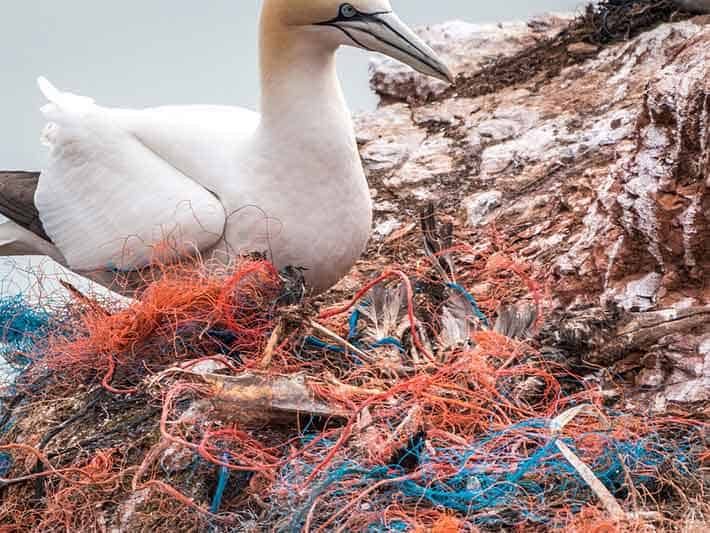 Birds become entangled in plastic waste