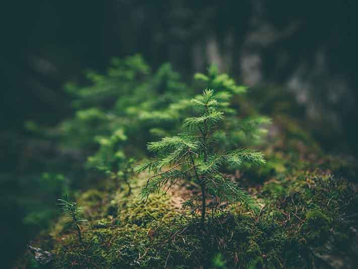 How Planting Trees Can Help Combat Climate Change