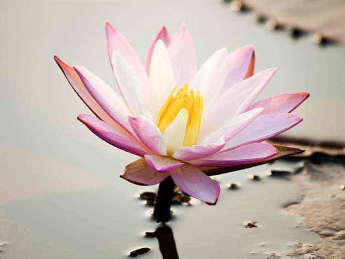 Flower 7 Attitudes of Mindfulness