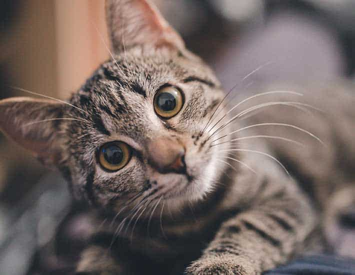 Sustainable Products for Pet Cats