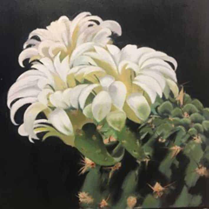 ilhan sayin, goz kamastirici kaktus / glamorous cactus