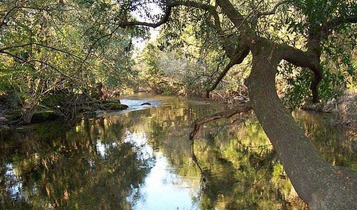 lithia spring park alafia river Lithia Springs: Camp at this cool, secluded park near Tampa
