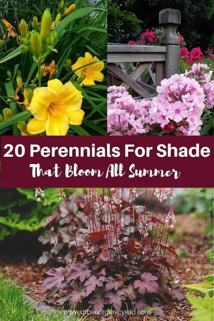 20 Perennials Flowers For Shade That Bloom All Summer (With Pictures)