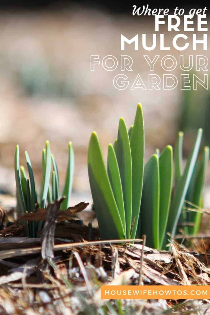 Where to get free mulch for your garden - This can save a lot of money