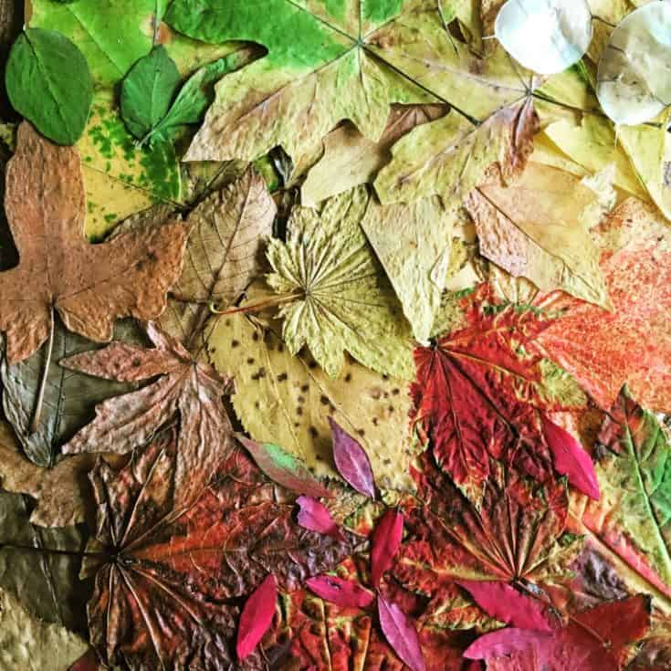 How to preserve dried leaf art with wax paper