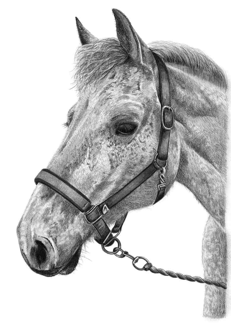 Horse Pencil Drawing Artist Horse Portraits From Photos For Sale Uk