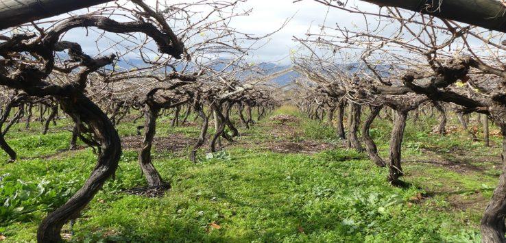Paarl Vineyards
