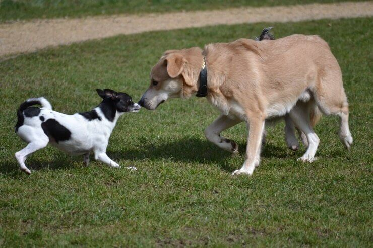 Mundgeruch beim Hund