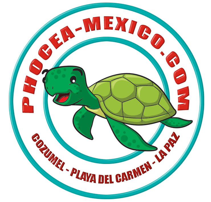 Phocea Mexico La Paz
