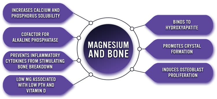 function of magnesium for bone