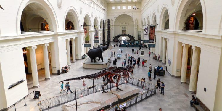 The field museum captures kids as soon as they walk in.
