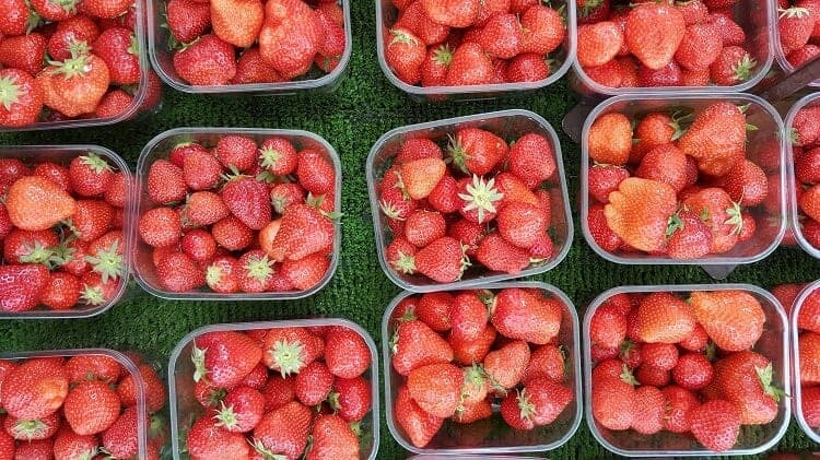 Strawberry Production in Alabama