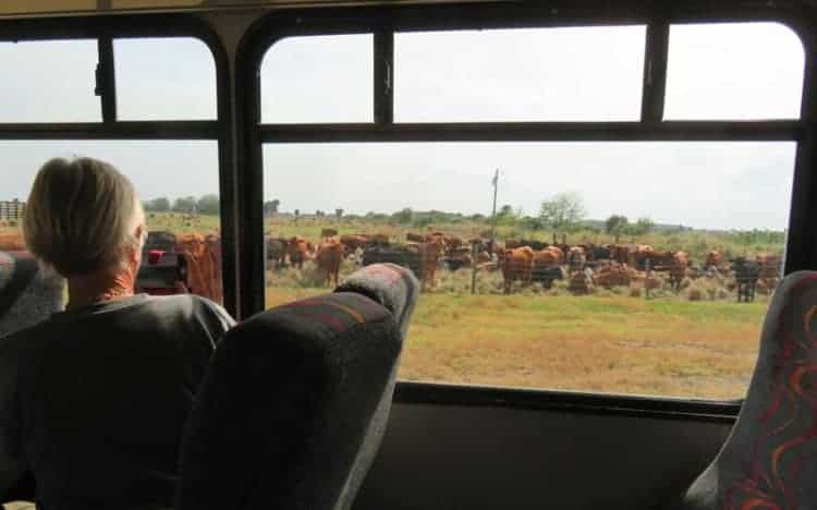 The free Deseret Ranches tour is by bus. (Photo: David Blasco)
