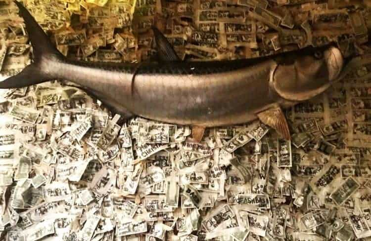 The Dollar Bill Bar at the Cabbage Key Inn is estimated to have more than $70,000 taped to its walls and ceiling. (Photo by Bonnie Gross)