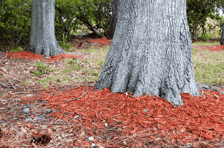 best mulch for trees