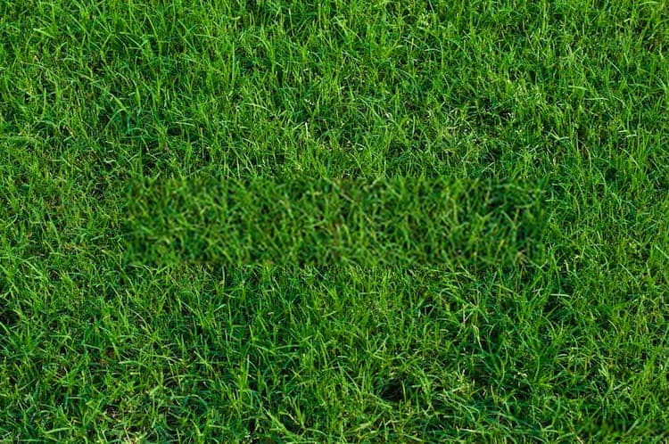 How To Keep Bermuda Grass Out Of Flower Beds
