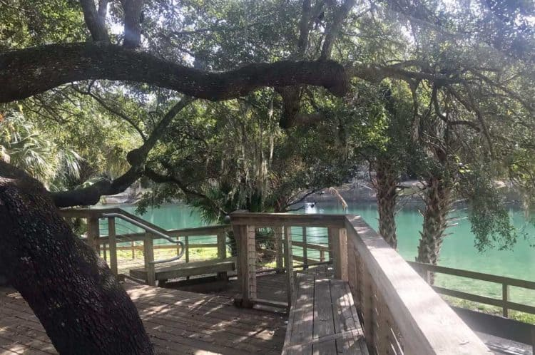Gemini Springs Park, along the Spring to Spring Trail, has two springs to see and lovely clear water you can admire from many vantage points. (Photo: Bonnie Gross)