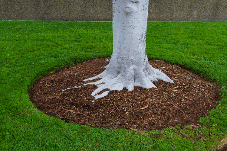 how to edge and mulch around trees