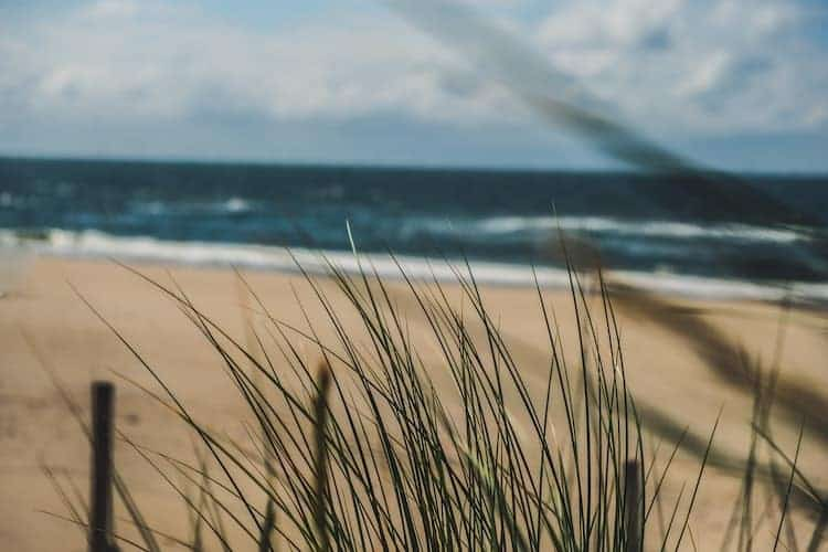 how to grow grass in sand and gravel