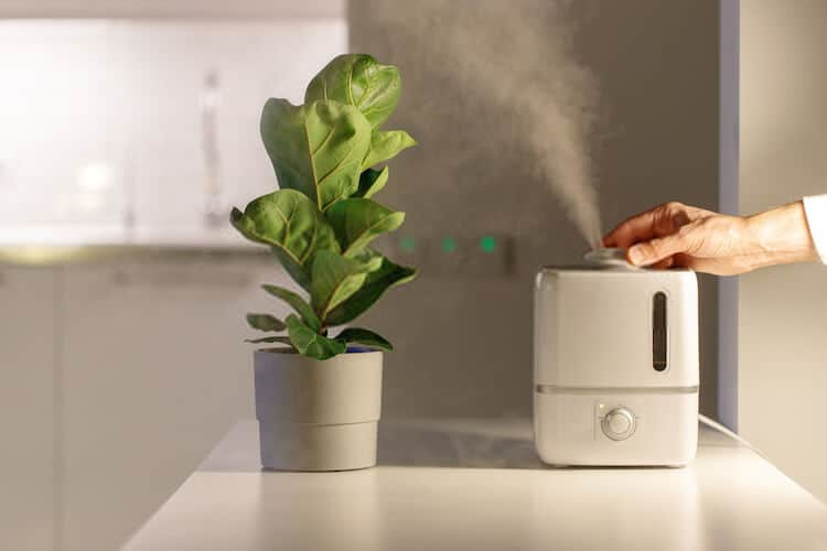 Benefits of Plant Humidifiers