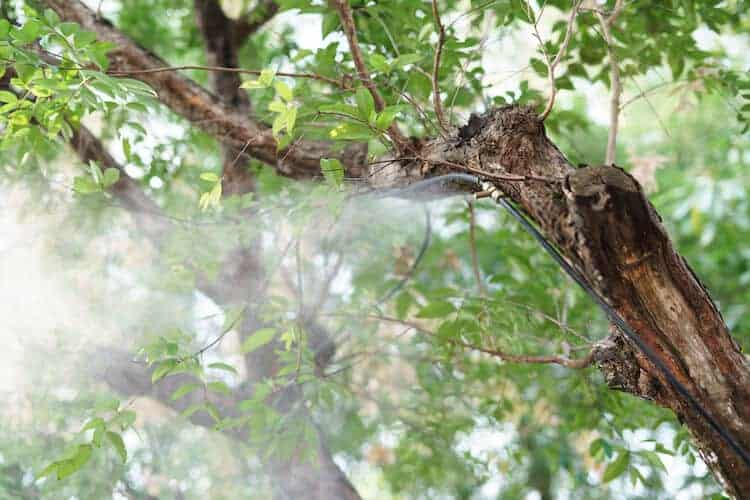 Disadvantages of Plant Humidifiers