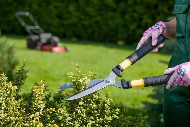 Is It Ok To Trim Bushes In The Fall