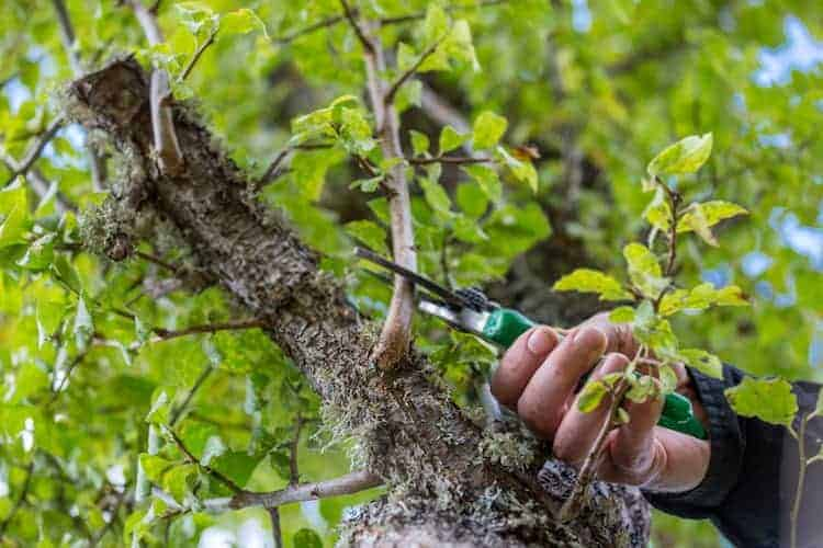 Why Sharpen a Pruning Saw