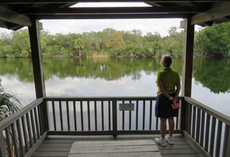 Viewing area along boardwalk behind Merritt Island National Wildlife Refuge Visitor Center. (Photo: David Blasco)